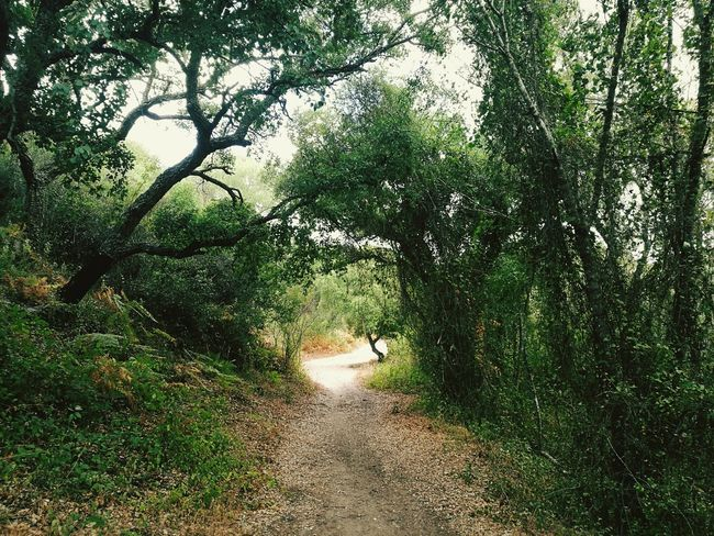 Pinar del Rey route Forestwalk Forest Montains    Bosque Andalucía SPAIN Spain ✈️🇪🇸 Tree Hiking San Roque Nature