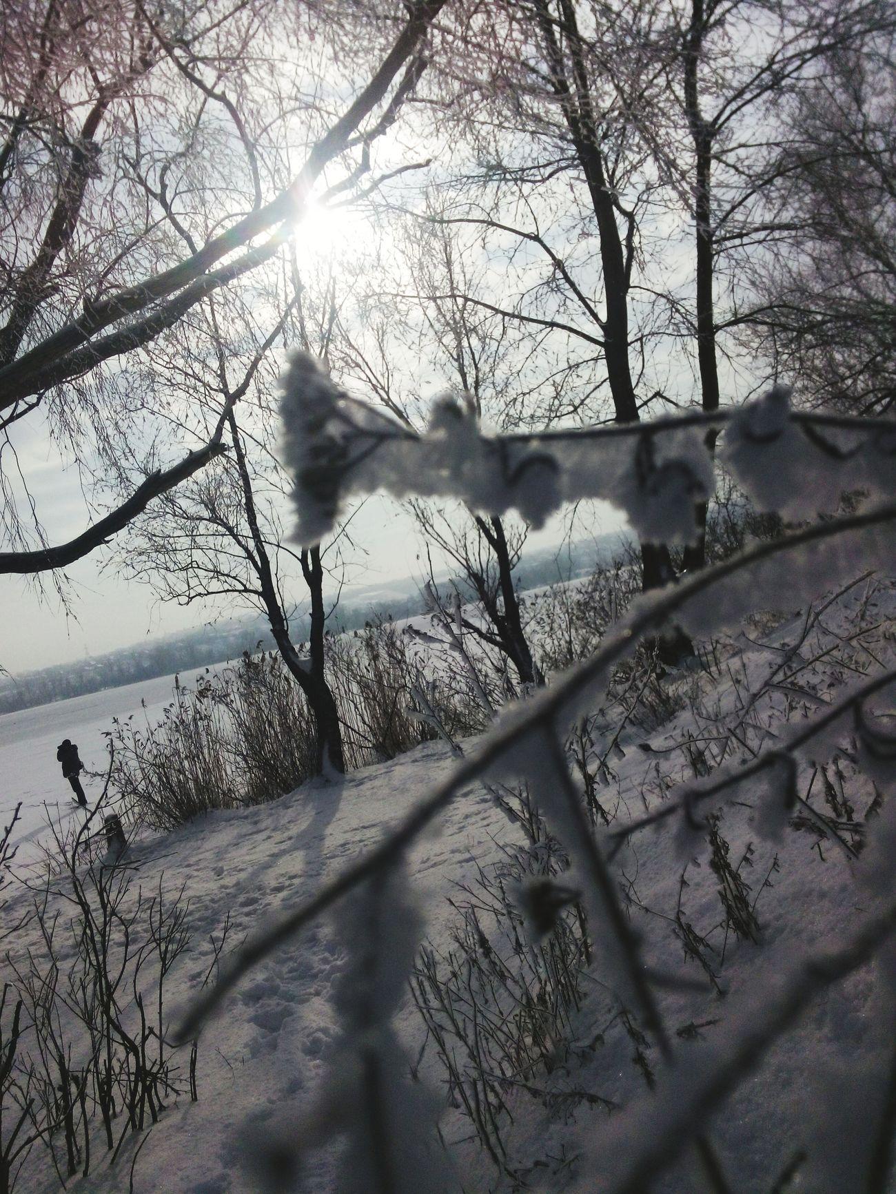Winter Monochrome Trees
