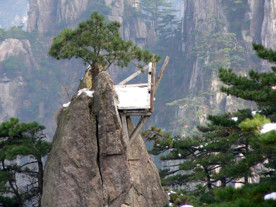Yellow mountains, China Amazing Nature Amazing Place Amazing View Day Mountain Nature Tree Yellow Mountains