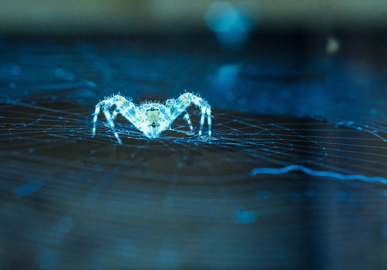spider waiting for prey Animal Leg Animal Themes Animals In The Wild Arachnid Arachnophobia Araneus Diadematus Beauty In Nature Blue Catching A Show Close-up Darkness Fear Fragility Frigid Hunting Insect No People One Animal Outdoors Robber Spider Spider Web Waiting