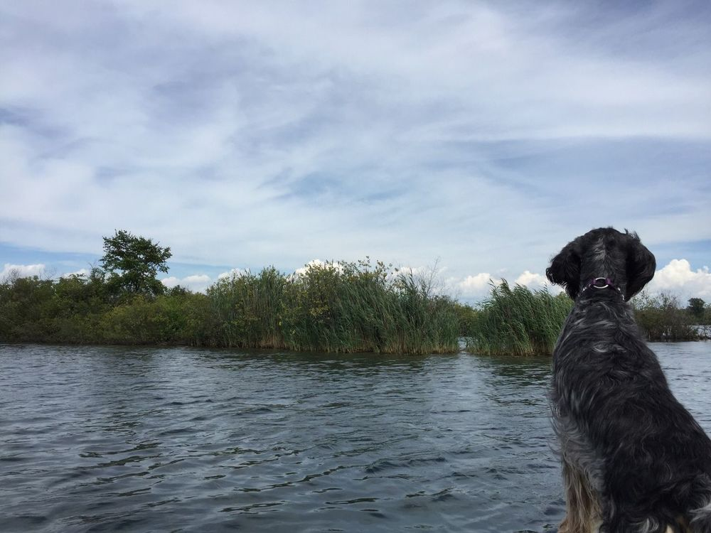 Marsh madness Detroit River Exploring Nature Riverside Photography Hidden Beauty Michigan Summer Dog In Boat English Setter Marshland  Marsh Grass