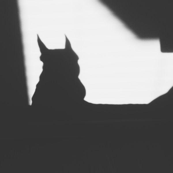 Batman Shadow Frenchie Frenchbulldog Dog Gothamcity
