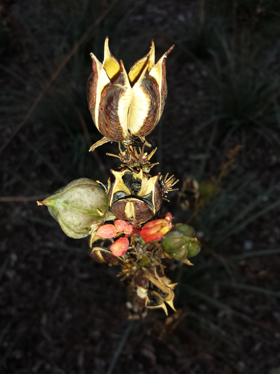 Plant Seed Pod