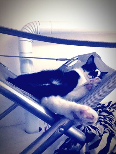 Cat Relax Sempredinerodevivestire