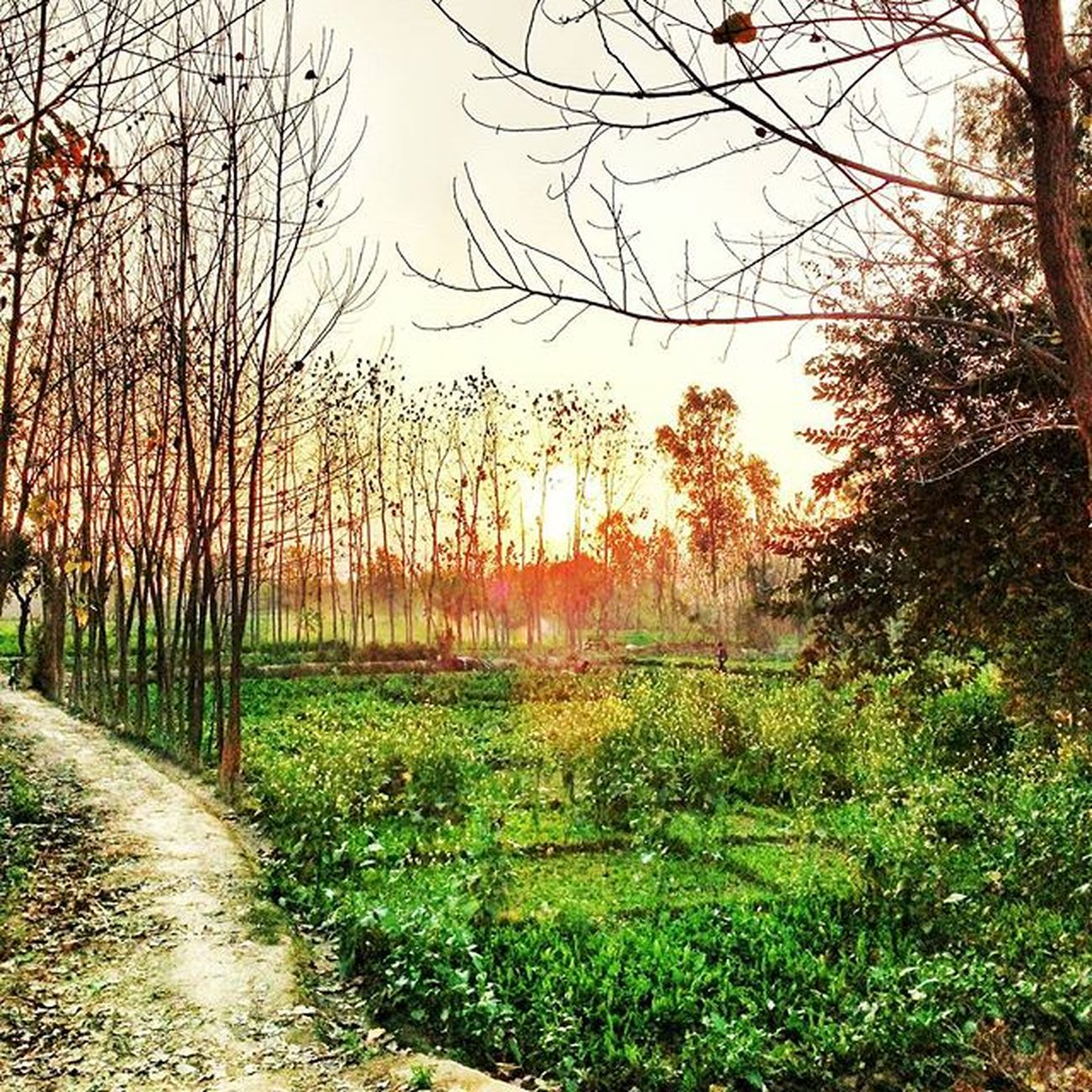 Dream_street Sunset Long_way Location- Shahjahanpur Greats_by_me Photoddicted 😜