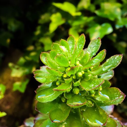 #nature_collection #EyeEmNaturelover #nature #sunset #sun #clouds #skylovers #sky #nature #beautifulinnature #naturalbeauty #photography #landscape Beauty In Nature Close-up Day Freshness Green Color Growth Leaf Nature No People Outdoors Plant