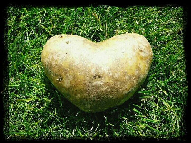 Don't eat me, I love you!!! Love , Nature Textures , Magic Potato, Food Love