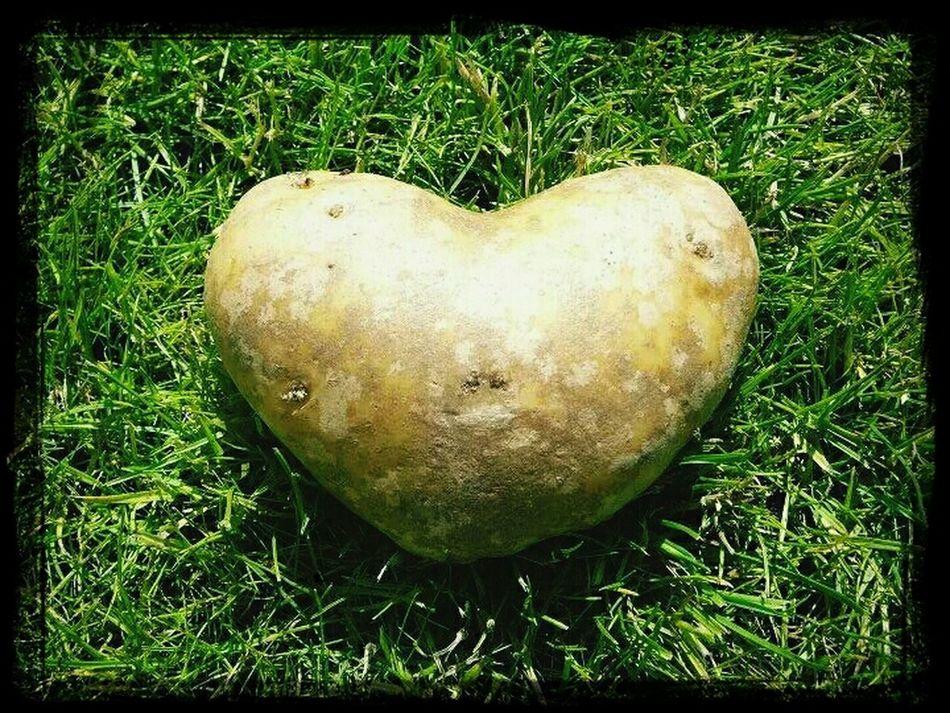 Don't eat me, I love you!!! Love , Nature Textures , Magic Potato, Food Love