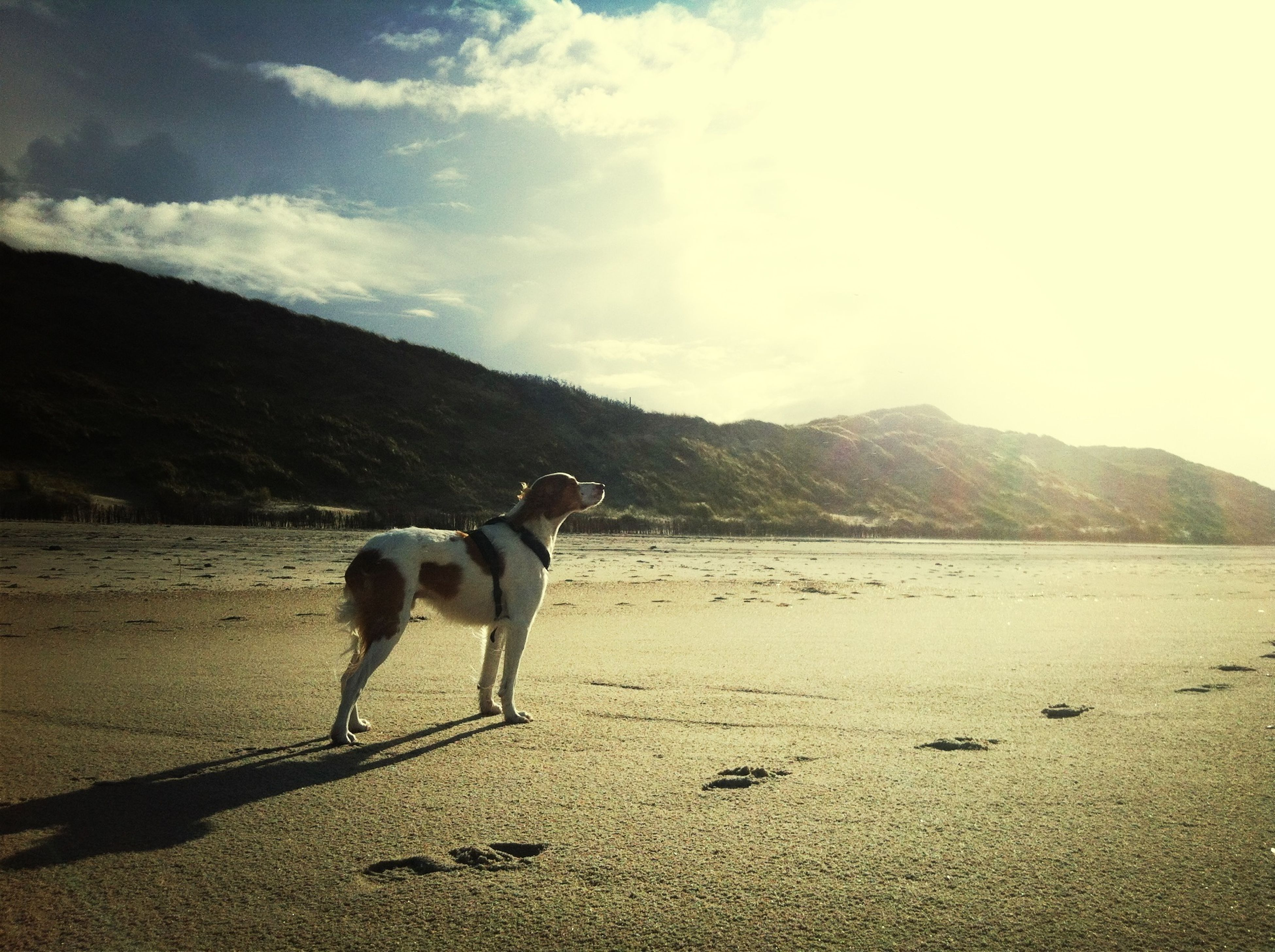 domestic animals, animal themes, dog, one animal, mammal, pets, sky, sand, beach, mountain, full length, walking, nature, standing, tranquil scene, sunlight, tranquility, landscape, shore, day