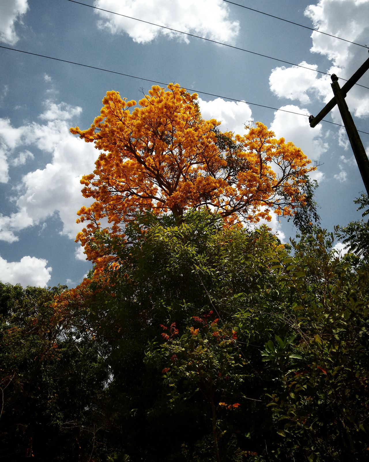 Ipe Nature Sky Tree Beauty In NatureBrazil New Life Beauty In Nature Yellow Rose Yellow Follower