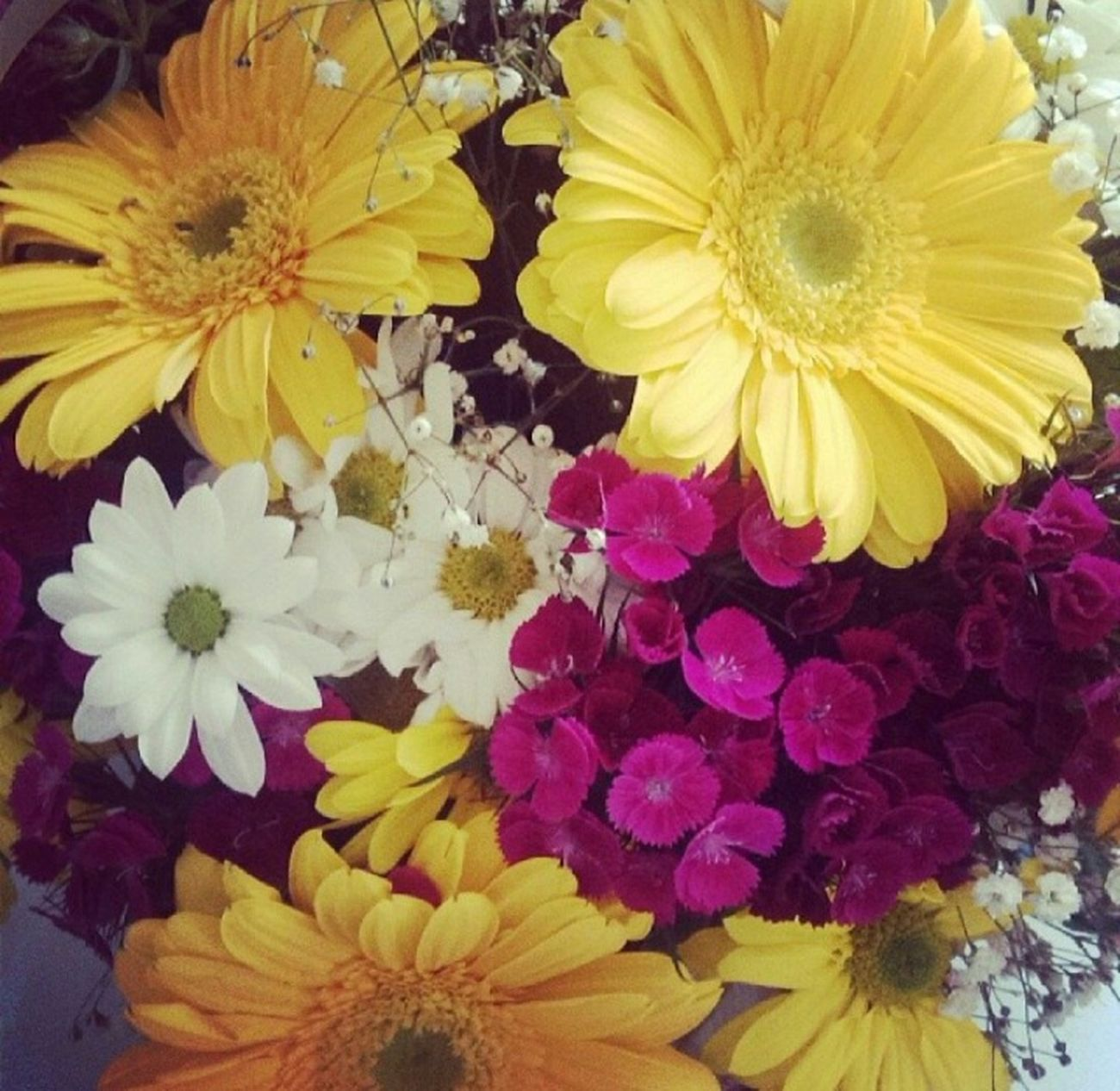 süpriz papatyalarımla günaydın😊 EyeEm Flower First Eyeem Photo Faces Of EyeEm Taking Photos Hi! Eyem Gallery EyeEm Best Shots Sweethome Justmarried💑 Beautiful Day