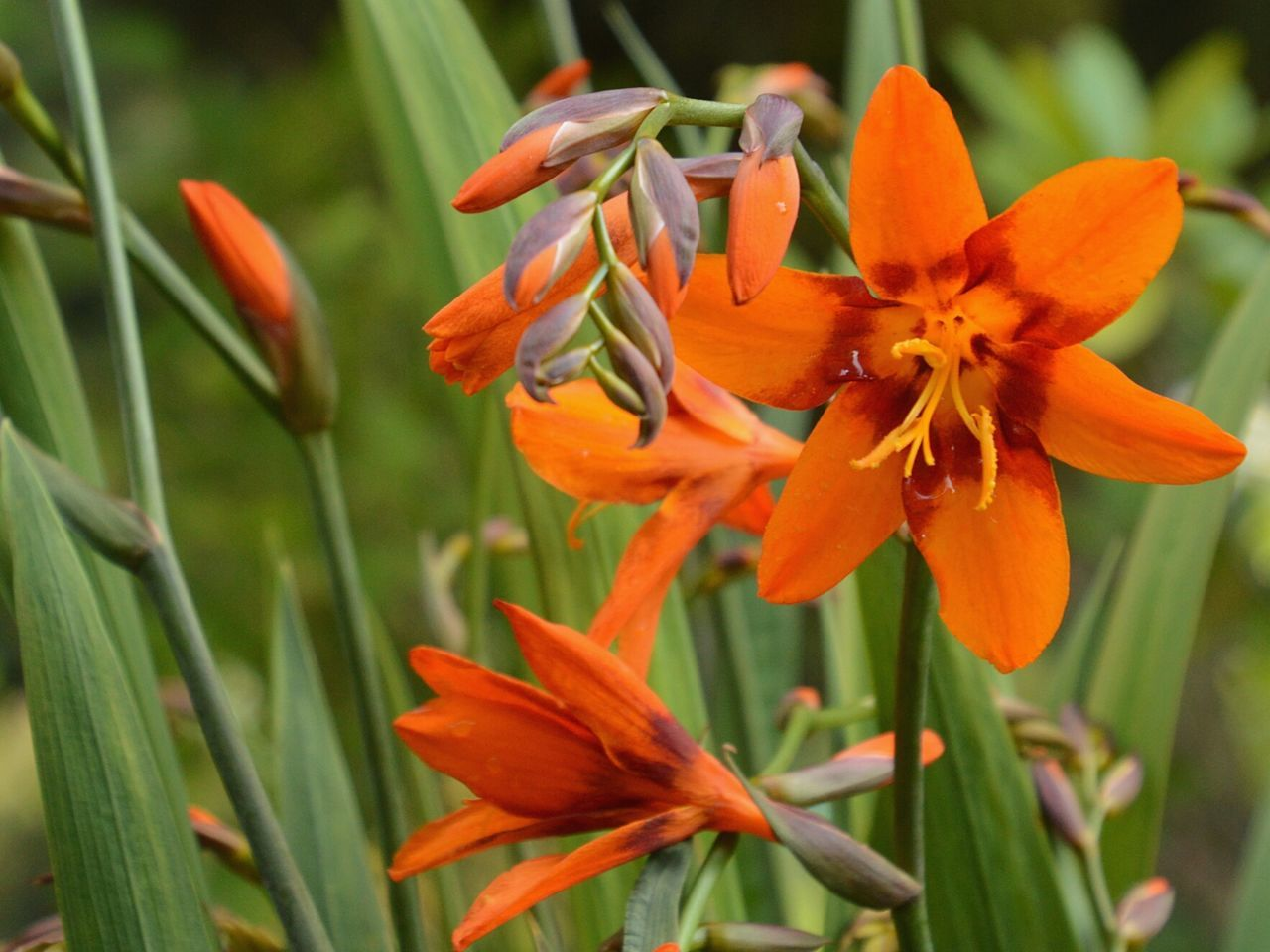 flower, petal, freshness, flower head, fragility, growth, beauty in nature, blooming, close-up, orange color, nature, plant, focus on foreground, pollen, stamen, in bloom, blossom, day, botany, no people, outdoors, selective focus, softness