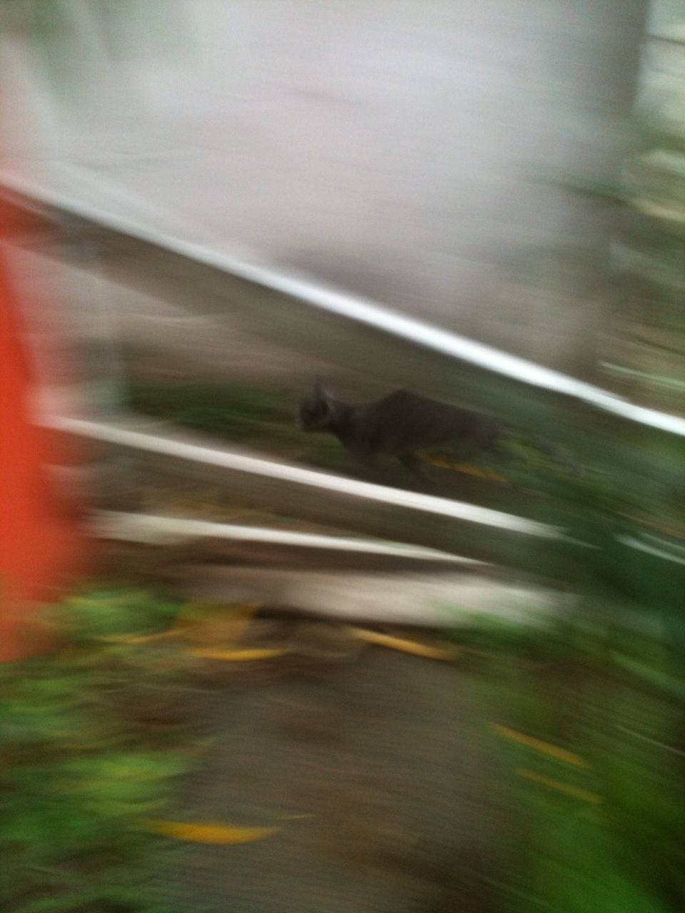 blurred motion, motion, speed, outdoors, transportation, water, day, nature, no people, animal themes, defocused, technology, close-up, mammal