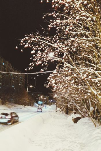Murmansk Winter Snow ❄ Rowan Hugging A Tree Snowy Trees Small City Life Night View Night Photography EyeEm Gallery