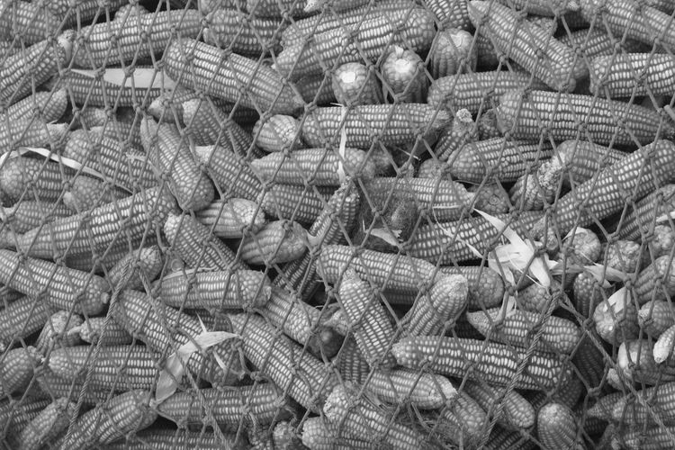Backgrounds Black & White Black And White Close-up Corn Corns Day Fishing Equipment Fishing Net Food Foods Full Frame Large Group Of Objects Net No People Orange Color Outdoors Pattern Tied Up