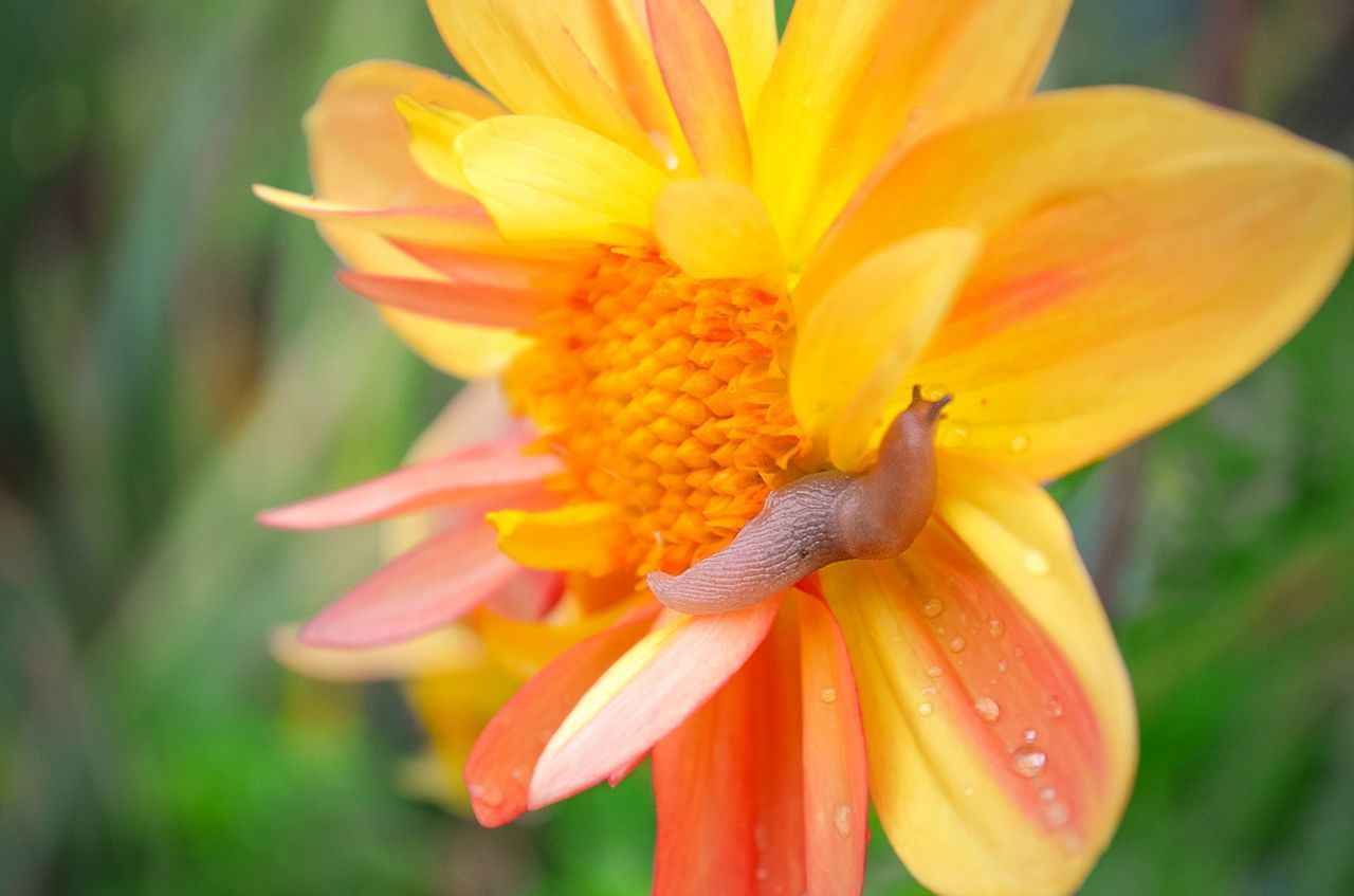 цветы цветок  Flower Yellow Single Flower Yellow Flower Слизень слизняк