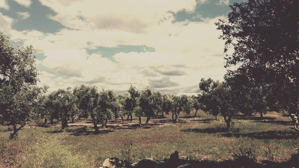 Apulia's land Puglia South Italy Puglia Myland  Duesicilie Terradibari Bari