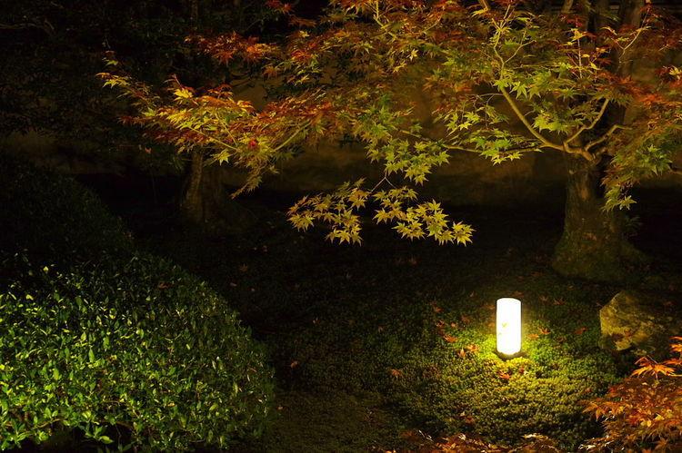 そうだ京都、行こう。 雲龍院 紅葉 紅葉🍁 ライトアップ Autumn Leaves Autumn🍁🍁🍁 Beauty In Nature Nature Unryuin Light And Shadow