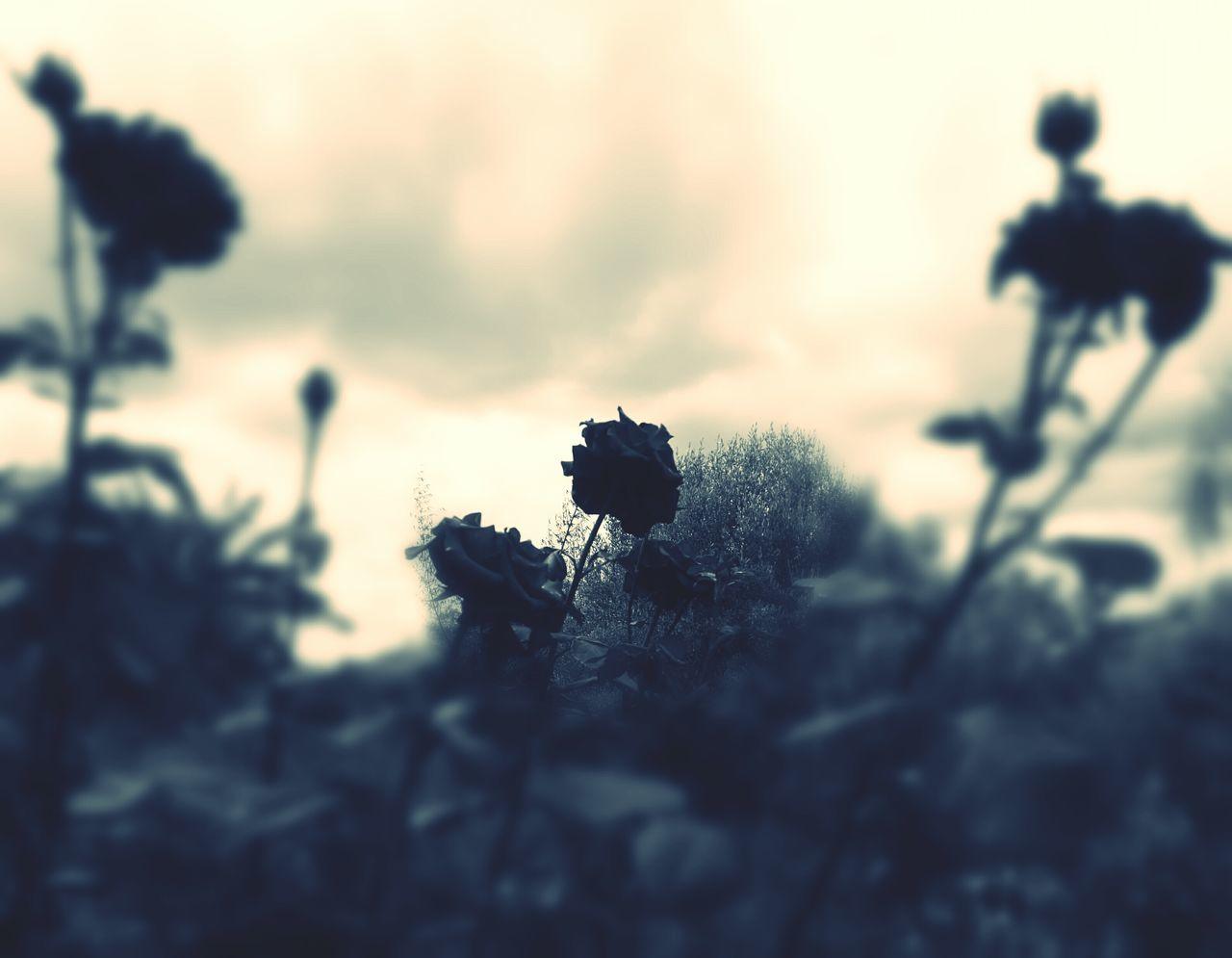Sguardo... Canicattini Bagni Fiori Flowers Natura Clero Siracusa Sicily Melilli Chiesa Priolo Gargallo Floridia  Siracusa Fiore Barocco San Sebastiano Sicily Rose🌹 Viso Sguardo  Sguardo Tenero