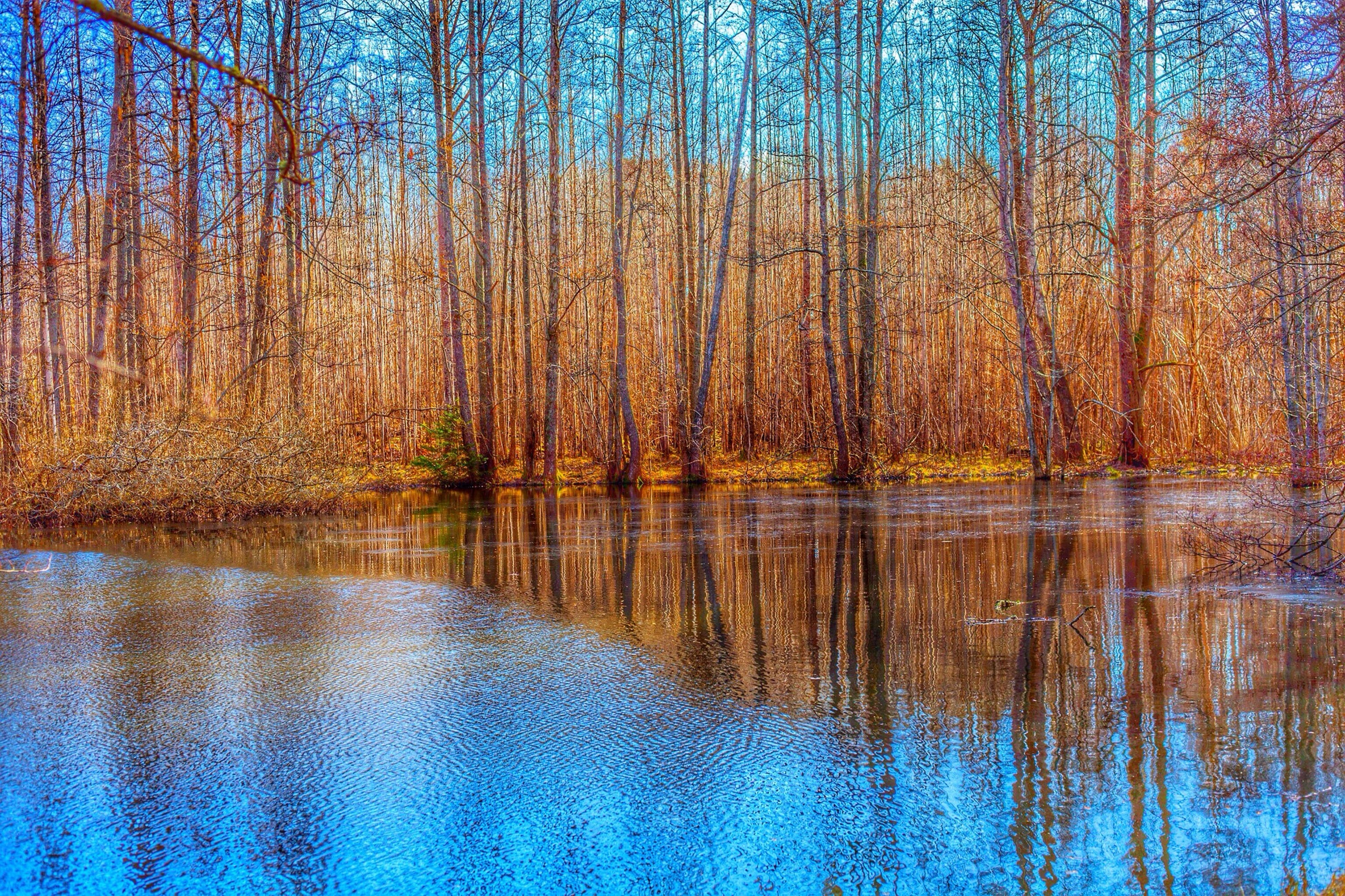 water, tree, reflection, tranquility, tranquil scene, lake, scenics, beauty in nature, waterfront, nature, blue, forest, idyllic, non-urban scene, standing water, outdoors, day, growth, woodland, no people