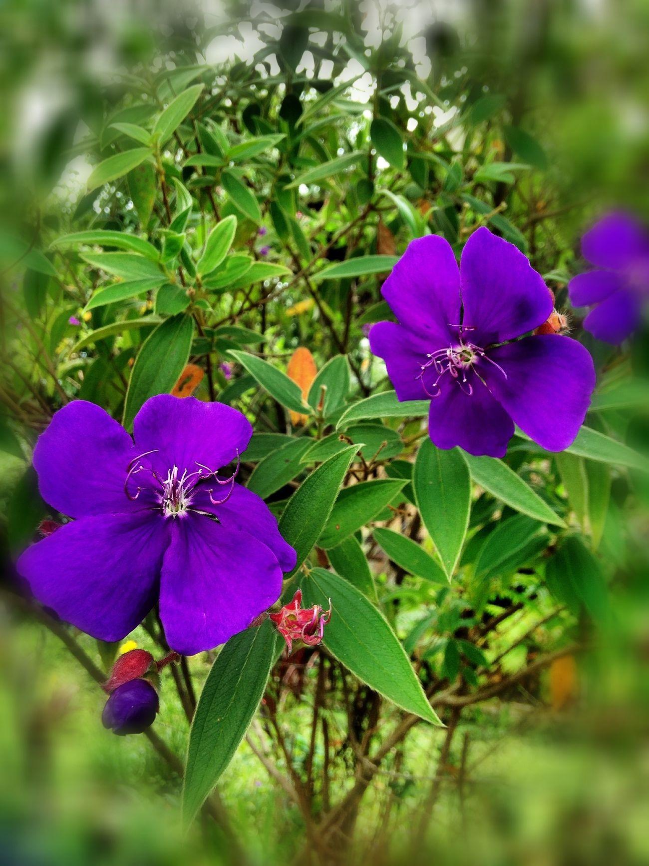 Flowers EyeEm Nature Lover