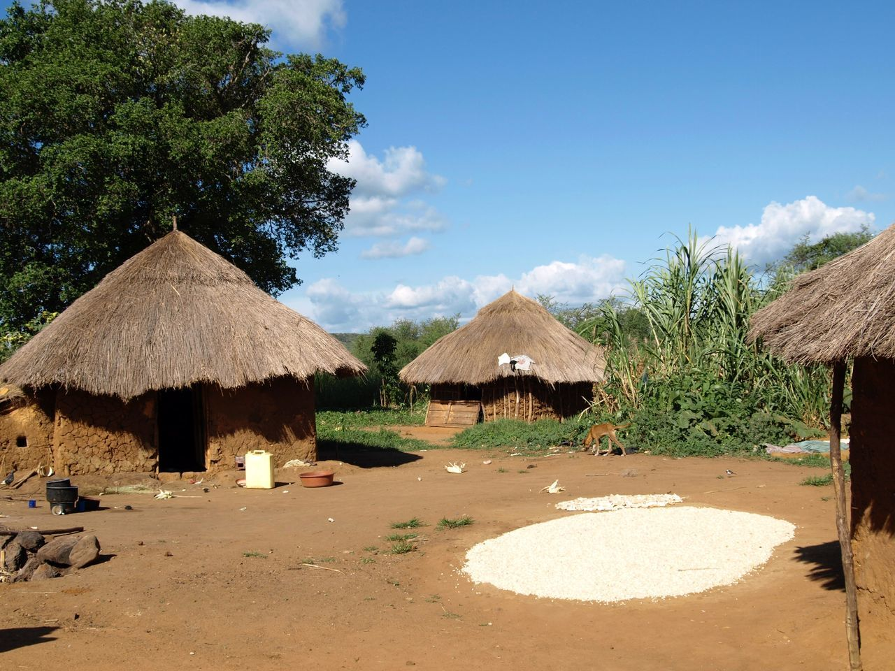 Drying mais harvest in small african island village Africa Blue Cloud Cloud - Sky Day Drying Mais Huts Idyllic Landscape Mais Nature No People Outdoors Rural Africa Rural Houses Rural Huts Scenics Sky Sunlight Sunny Thatched Roof Tranquil Scene Tranquility Tree Uganda