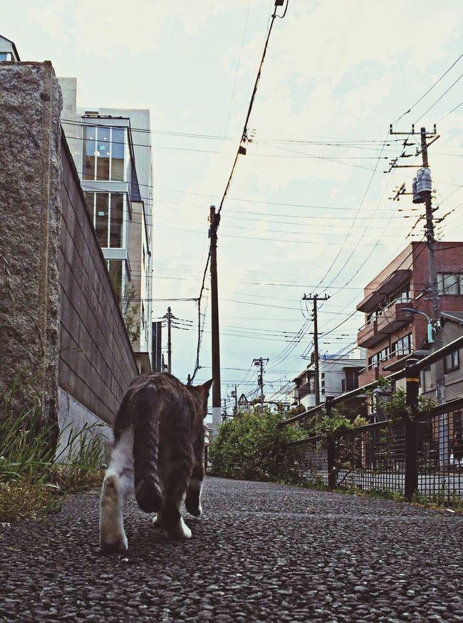 Cat Cat Lovers