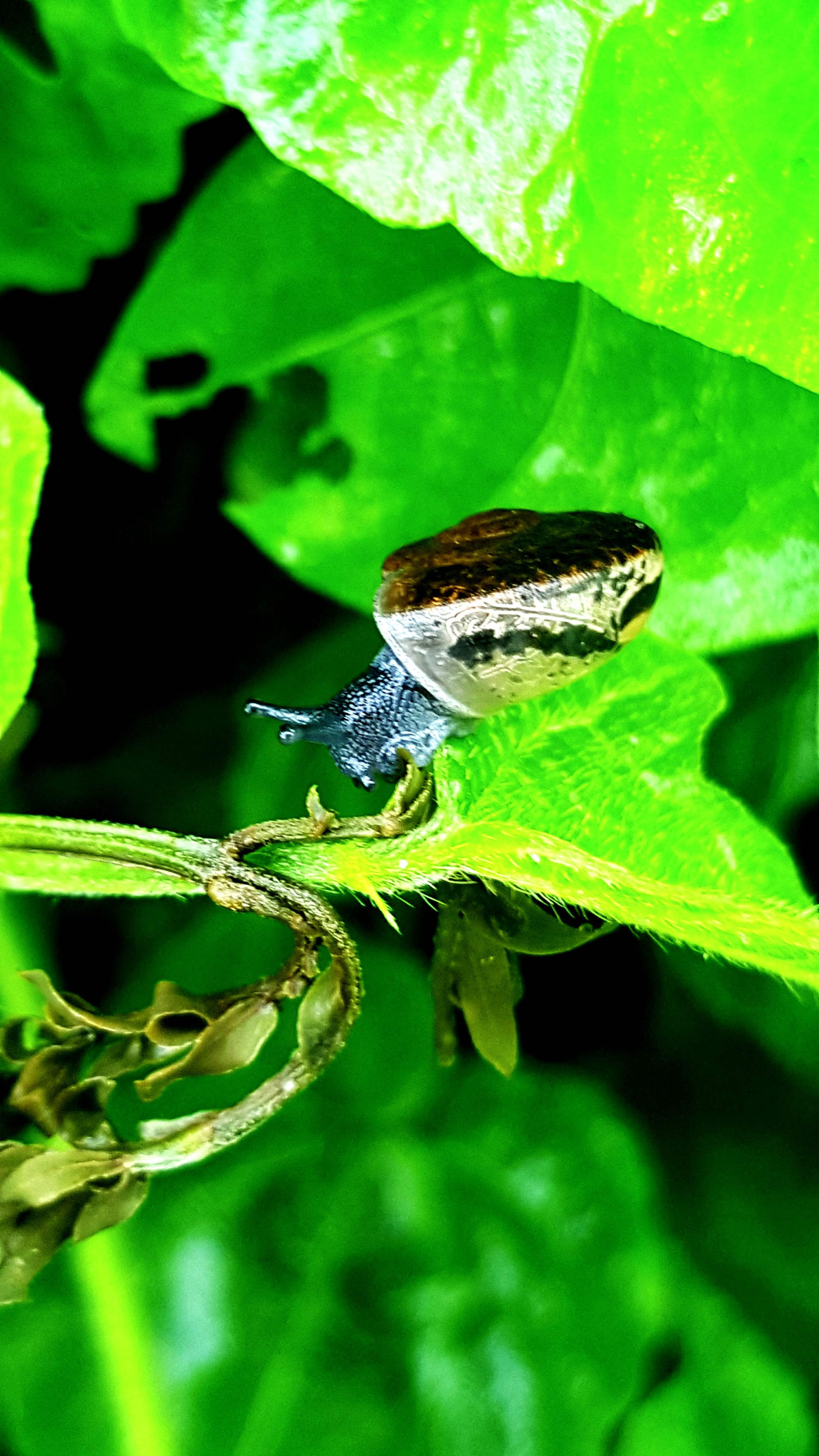 animal themes, wildlife, leaf, green color, close-up, nature, plant, focus on foreground, amphibian, outdoors, day, beauty in nature, selective focus, no people, green, animal, animal antenna, growth