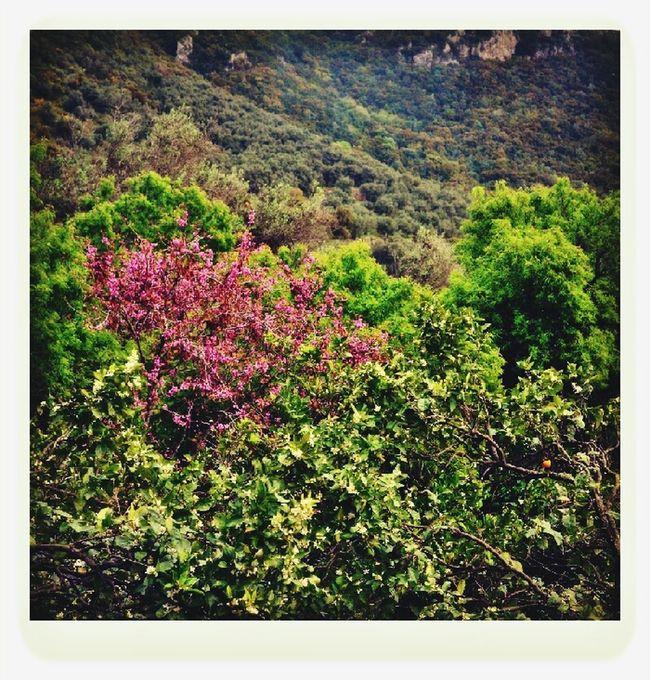 Mountain Flowers,Plants & Garden