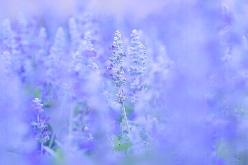 Nature Growth Flower Beauty In Nature No People Freshness Plant Fragility Outdoors Close-up Day Macro