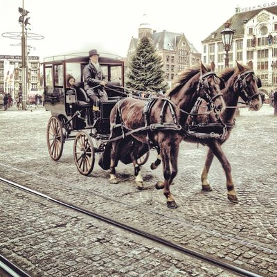 horse ciarriage at Amsterdam by Bruno