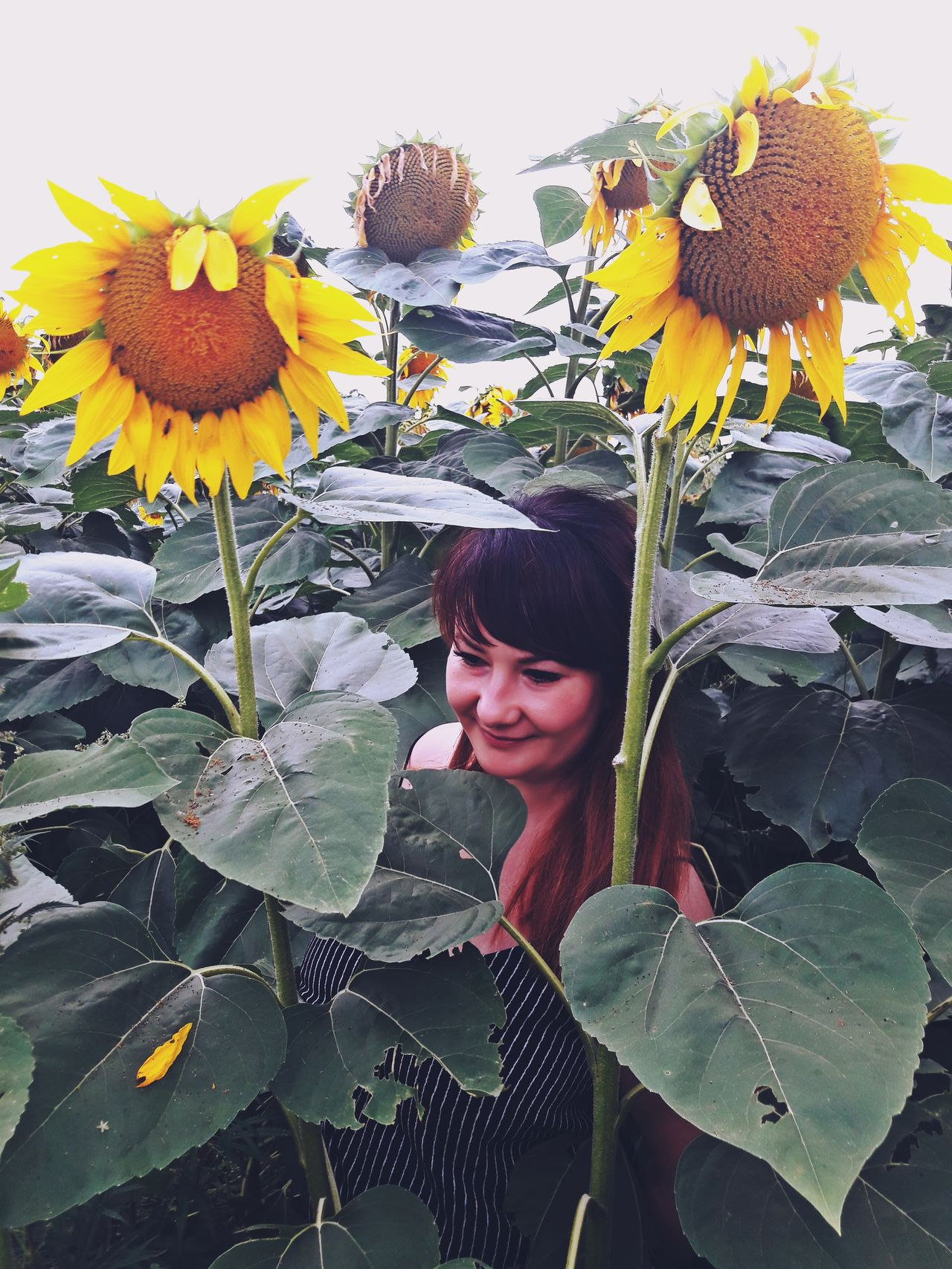 Beautiful Woman Beauty In Nature Close-up Day Flower Flower Head Fragility Freshness Growth Leaf Lifestyles Nature One Person Outdoors People Plant Real People Sunflower Yellow Young Adult Young Women