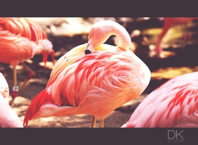 P I N K Pink Bird Flamingo Lazoo Zoo Losangeles California Nature
