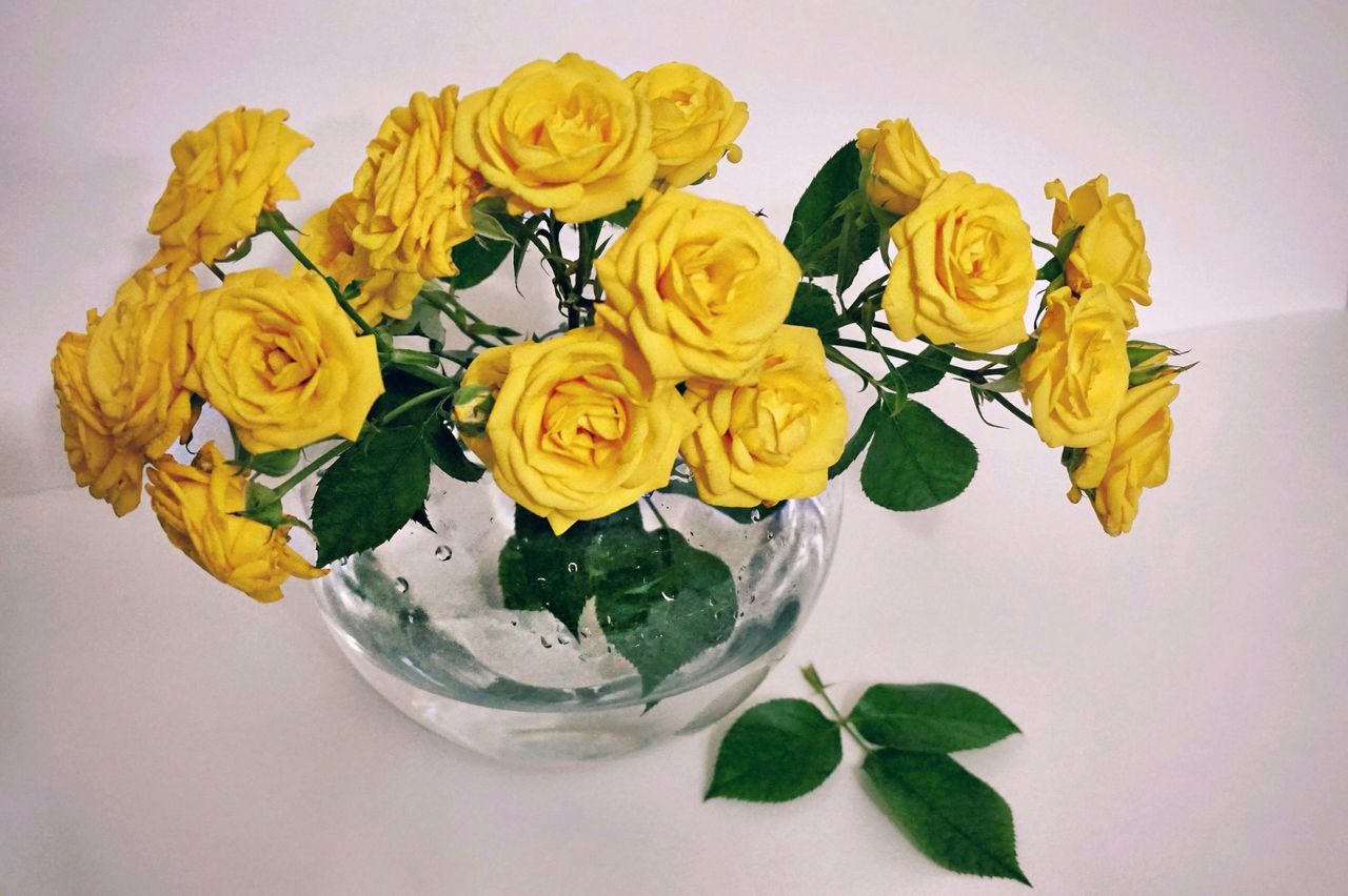 Good Morning Flowers For My Friends Yellow Roses Yellow Flower Flower Collection My Flower Obsession Flower Hello World Flowers :) EyeEm Gallery Eyemphotography Exceptional Photographs My Secret Garden White Album Flowers Eye4photography  White And Yellow желтые_розы Bouquet From Russia With Love
