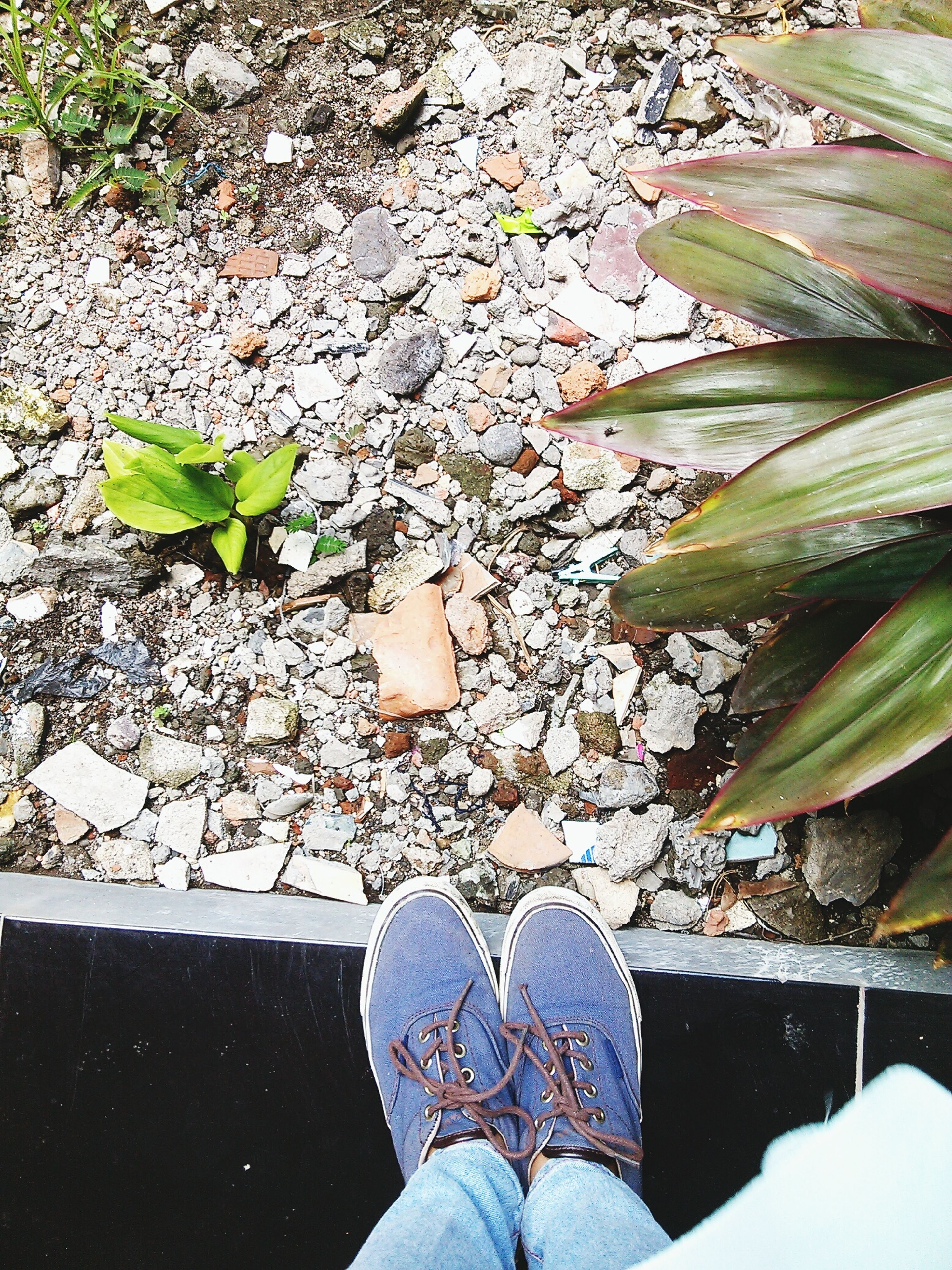 low section, leaf, person, high angle view, water, personal perspective, standing, shoe, plant, nature, leaves, day, outdoors, human foot, reflection, season, lifestyles