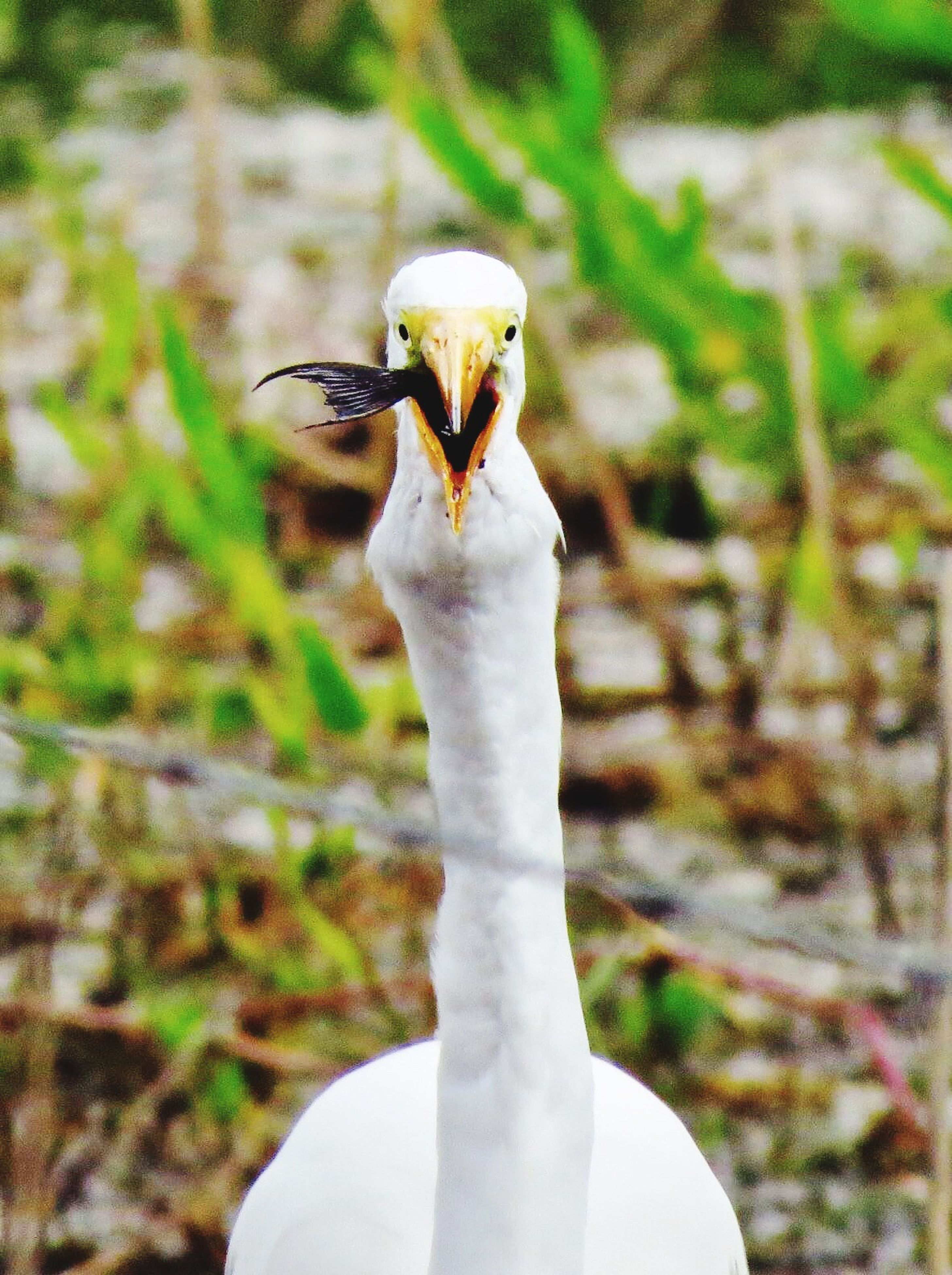 animal themes, one animal, bird, animals in the wild, wildlife, focus on foreground, close-up, beak, white color, animal head, looking away, outdoors, nature, portrait, day, zoology, front view, animal body part, part of
