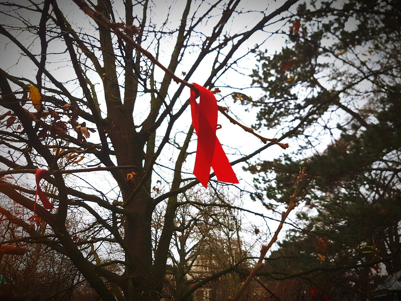 Arboreal messages Red Tree Sky Nature Outdoors Branch Beauty In Nature No People Day Ribbon Ribbons Red Ribbon Hiv HIV Awareness Gardens Park Cardiff Wales UK Cymru
