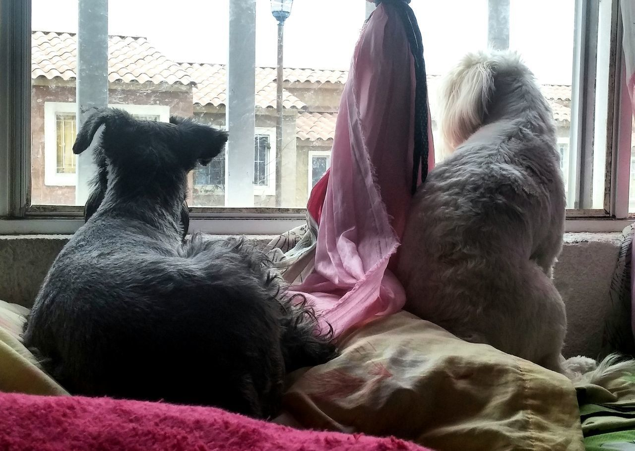 pets, domestic animals, dog, animal themes, mammal, one animal, indoors, real people, window, day, sitting, one person, lifestyles, architecture, close-up, people