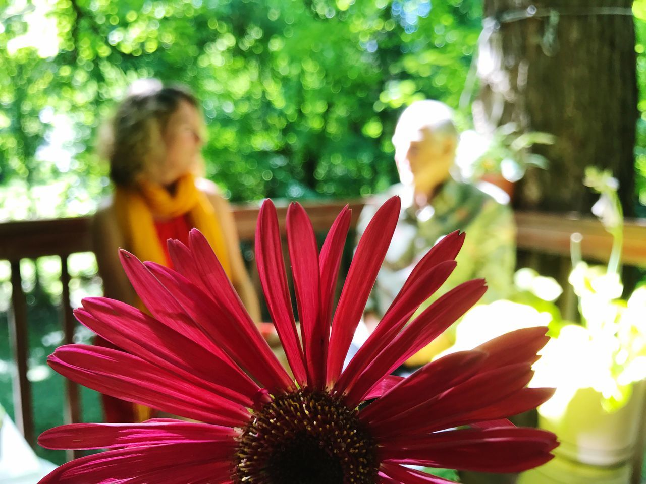Flower Nature Fragility Growth Petal Beauty In Nature Plant Outdoors Day Focus On Foreground Freshness Flower Head Close-up Blooming Real People Dialogue Dialogue Of Father And Daughter