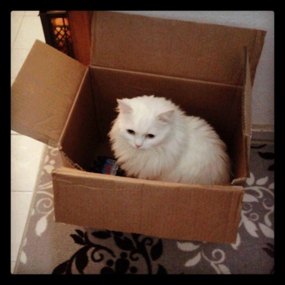 Bal küpü geldi haaaaniiiiim :) Maya Mayukhan Canici Cat kedi