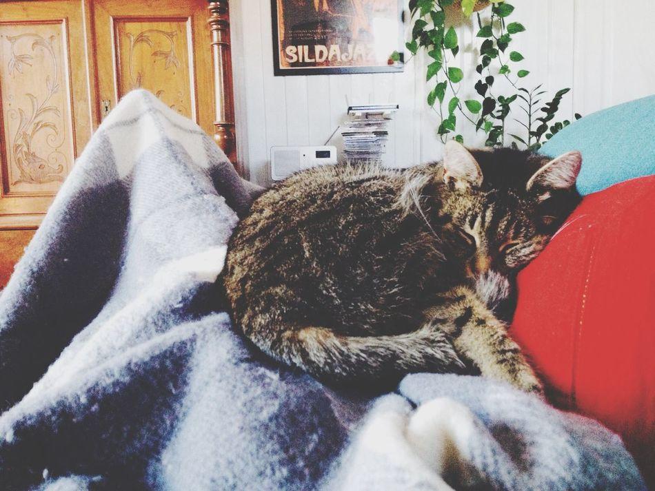 Cat Sunday Relaxing