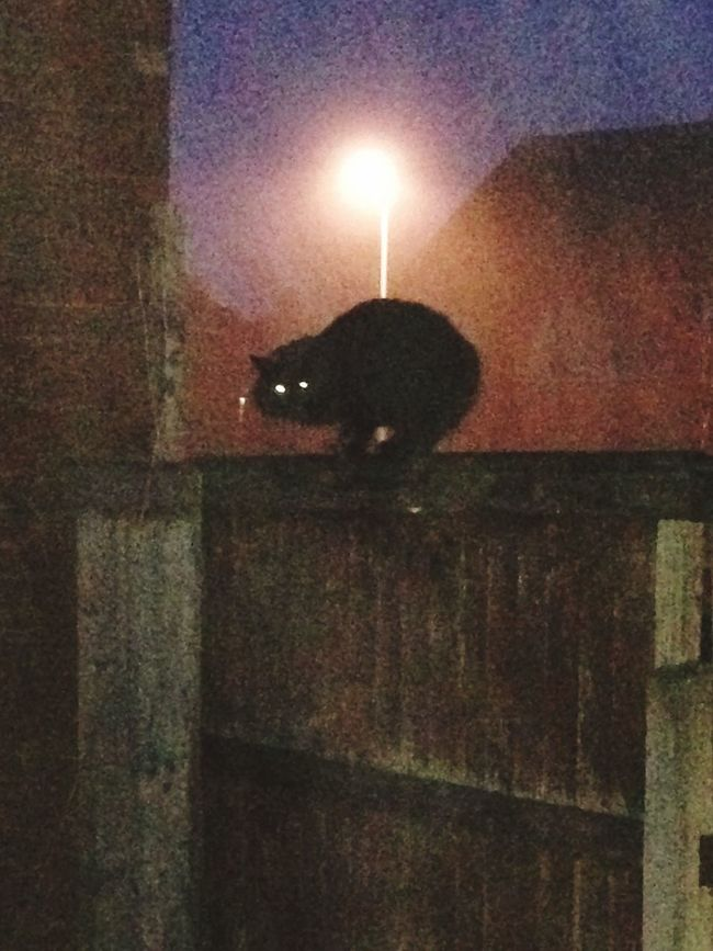 Spooky Atmosphere Light And Shadow Wooden Fence Night Cat Fog Mist Illuminated No People One Animal Animal Themes