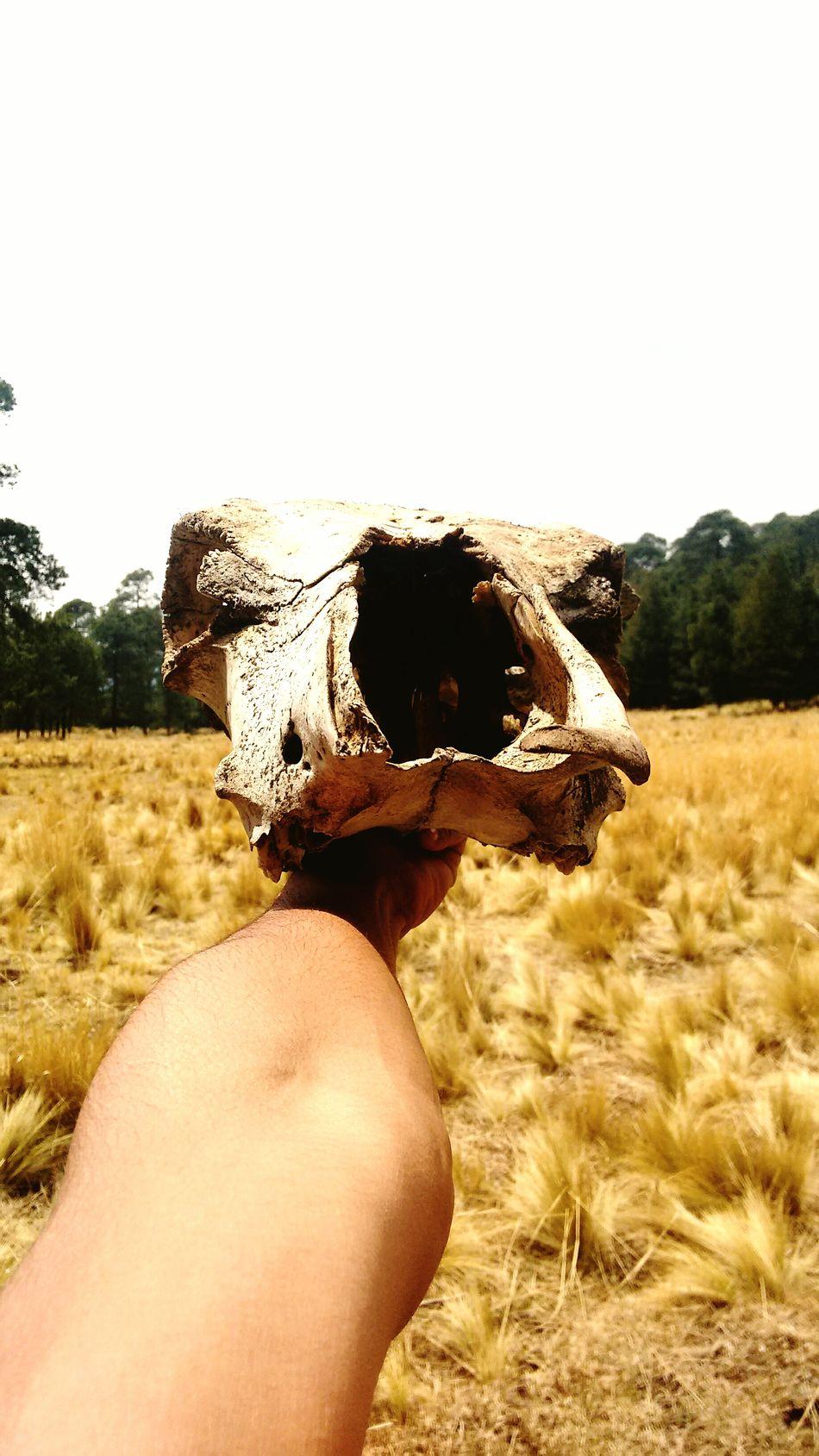 Day Paisajesbonitos Toros Y Caballos Cráneo Hello World LSD .. Bosque Y Vida Alucination One Animal Animal Themes Domestic Animals Trippy Beauty In Nature Nature
