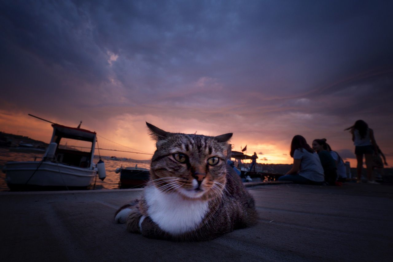 Animal Themes Nimbus Cat Sky Pets Domestic Animals One Animal Transportation Domestic Cat Mammal Mode Of Transport Cloud - Sky Animal Head  Animal Feline Cloud Zoology Outdoors Looking