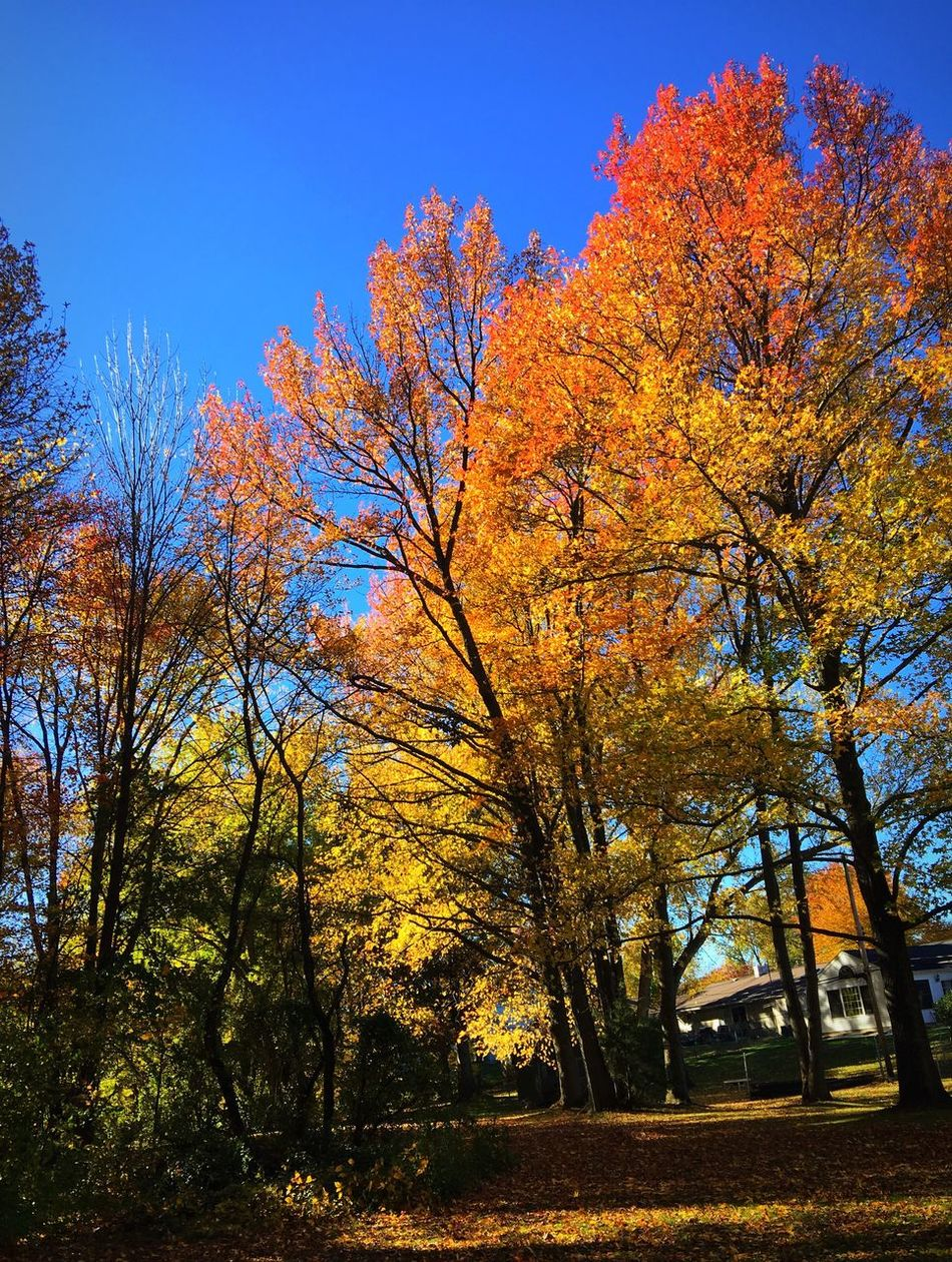Fall views Tree Autumn Grass Houses Nature Beauty In Nature Growth Sunlight No People Outdoors Clear Sky Tranquil Scene Forest Fall Colors Iphonephotography Tranquility Leaf Taking Pictures Relaxedand Happy Woods Scenics