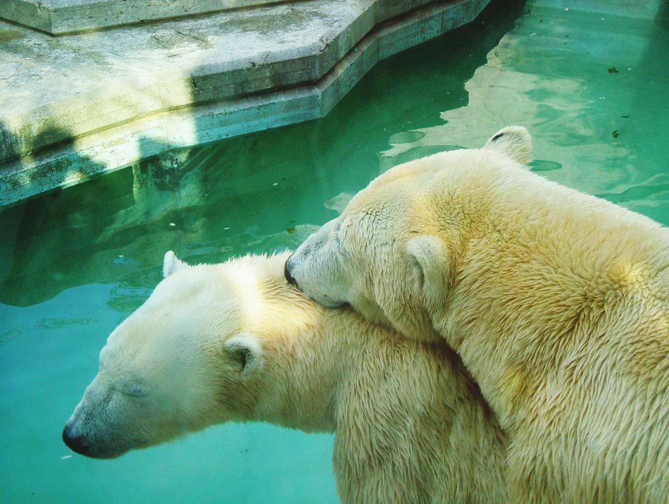Beautiful stock photos of polar bear, Animal Body Part, Animal Head, Animal Themes, Day