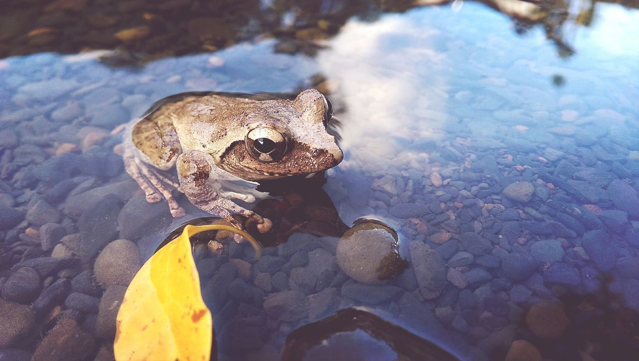 Textures And Surfaces Nature EyeEm Natue Lover Tree Frog Nature_collection Playing With The Animals Little Creatures Creatures Water Reflection Fall Beauty