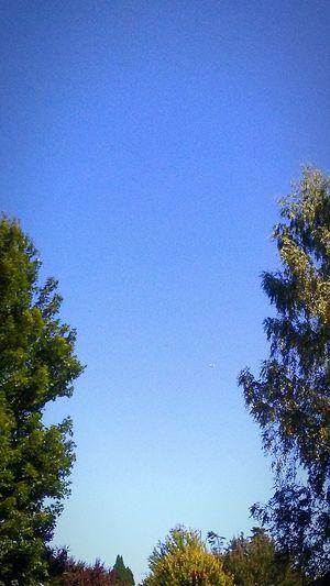 UFO? Its A Plane. Got Yah