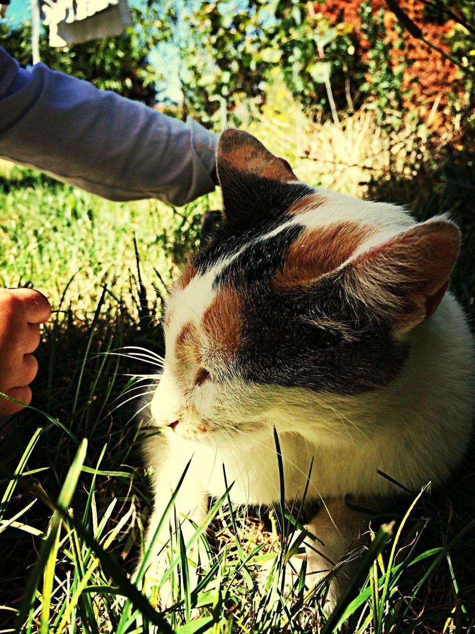 Cat Animals Eye Em Nature Lover Pet