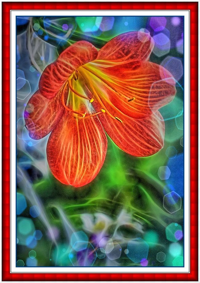 Floral fantasy Spring blossom Nature outdoors Out-of-focus Highlights orange-red Dreamy mystical Magical